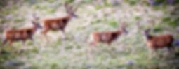 wyoming-mule-deer-scouting-600x232.jpg