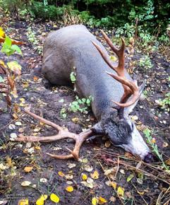 mule-deer-hunt2014-53.jpg