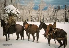 horse-mule-country22.jpg