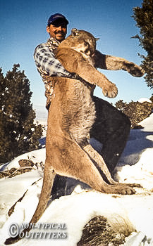 non-typical-mountain-lion06.jpg