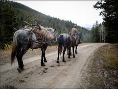 elk-hunt2009-17.jpg