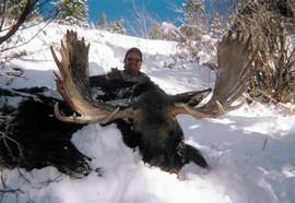 wyoming-moose07.jpg