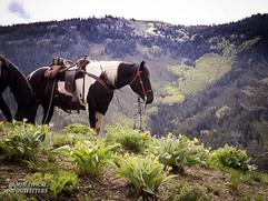 horse-mule-country05.jpg