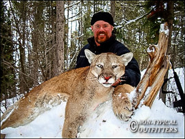 non-typical-mountain-lion17.jpg