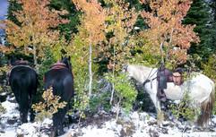horse-mule-country36.jpg
