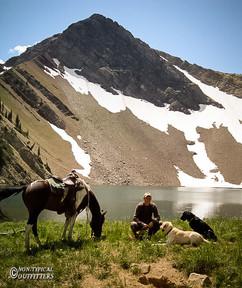 horse-mule-country13.jpg