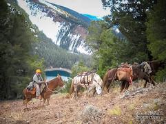 horse-mule-country08.jpg