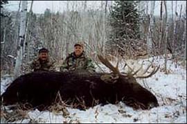 wyoming-moose02.jpg