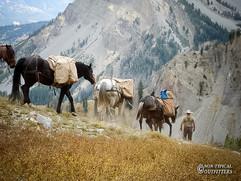 horse-mule-country01.jpg