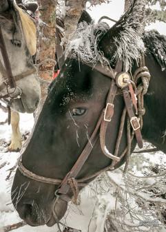 horse-mule-country37.jpg