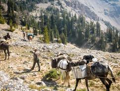 horse-mule-country34.jpg