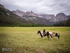 horse-mule-country14.jpg