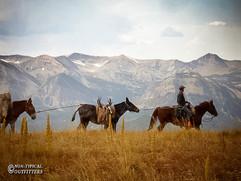 horse-mule-country20.jpg