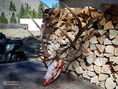 elk-hunt2011-03.jpg