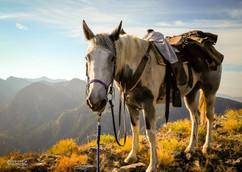 horse-mule-country35.jpg