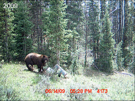 scouting-for-2009-43.jpg