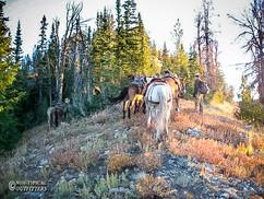 horse-mule-country23 (1).jpg