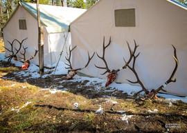 elk-hunt2013-19.jpg