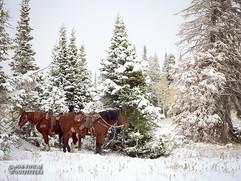 horse-mule-country28.jpg