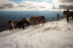 horse-mule-country29.jpg