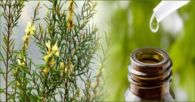 Australian Tea Tree oil, Used for medicinal and remedial In Aboriginal and Torres Strait Islander Communities and now used throughout the world
