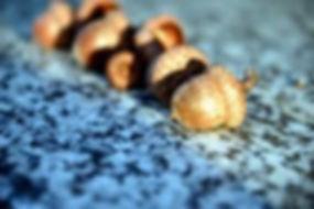 acorns_edited.jpg