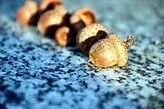 acorns_edited_edited.jpg