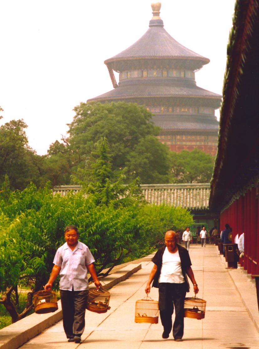 Beijing Birds