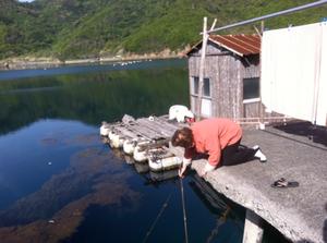 woman fishing for uni