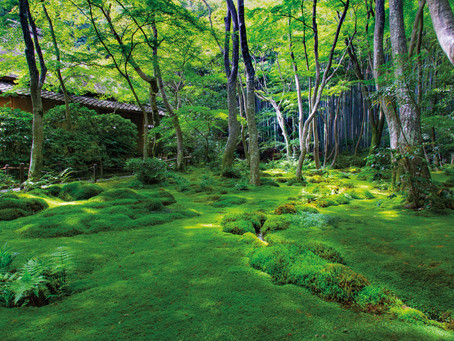 """JQ Magazine Review: """"Japanese Garden Notes"""" by Marc Peter Keane"""