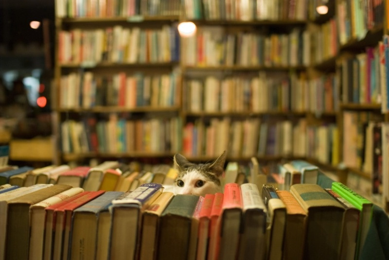 IndieBook: SBP founder Peter Goodman presents an inventive new plan to sell indie books