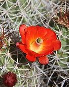Red flower square.jpg