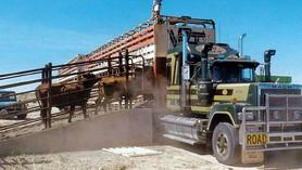 Cattle Tuck.jpg