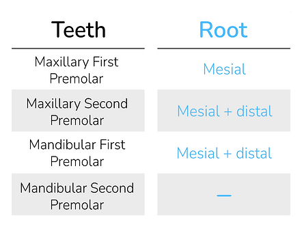 Root Depressions Mandibular Molars.png
