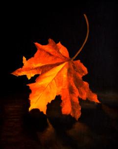 autumn leaf.jpg