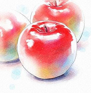水彩タッチりんご