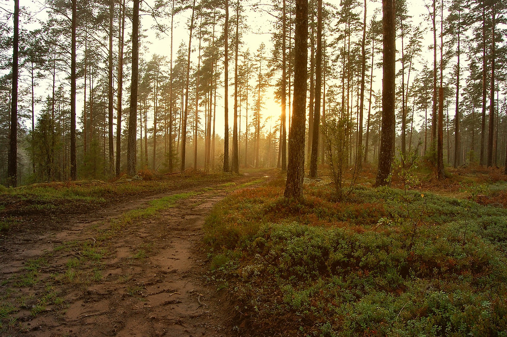 path in a sunlit forest