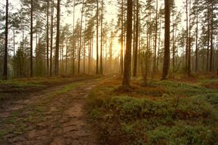 Coucher de soleil dans les bois