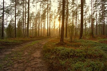 Sonnenuntergang in den Wald
