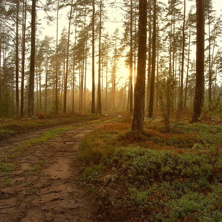 One-Day-Retreat : Breathe and Balance