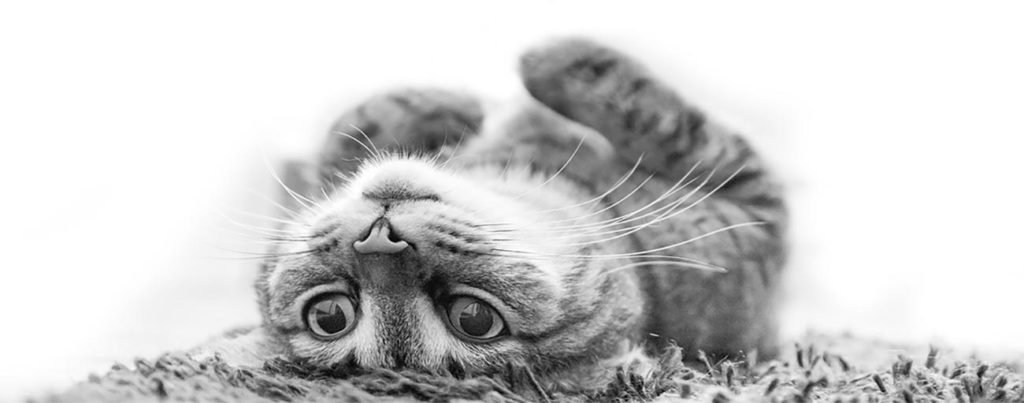upsidedowncat2-1024x403.jpg