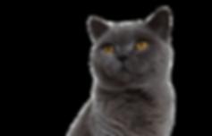 greycat_edited_edited_edited.png