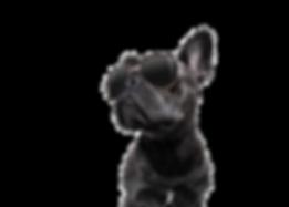 rockdog_edited.png