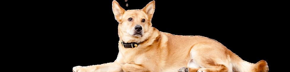doglarge-1024x254.png