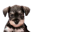 puppy5_edited_edited.png
