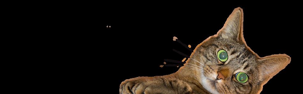 sidewayscat.png