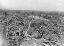 At Gueudecourt - May 1917
