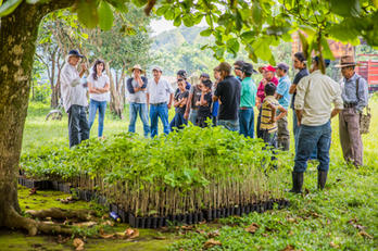 One Tree Planted-33.jpg