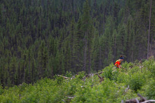 One Tree Planted-64.jpg