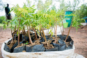 One Tree Planted-15.jpg